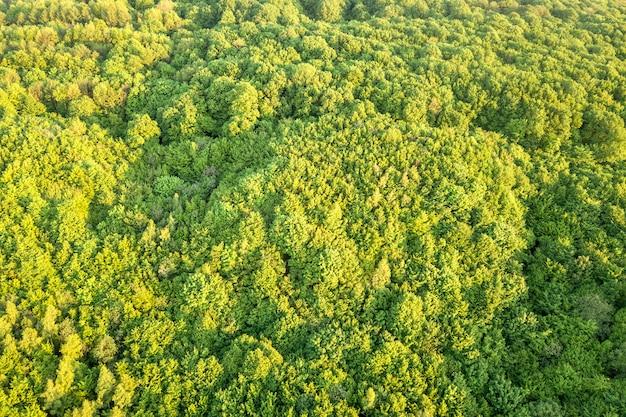 Draufsicht des grünen waldes am sonnigen frühlings- oder sommertag. drohnenfotografie, abstrakt
