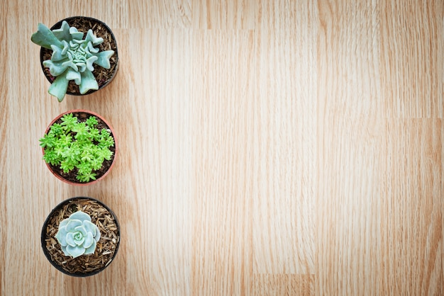 Draufsicht des kaktus der mischung drei auf hölzernem hintergrund succulent
