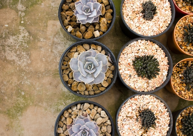 Draufsicht des kaktus mit blumenkaktus in einem topf mit kopienraum.