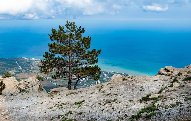 Draufsicht des malerischen panoramas des küstendorfs nahe dem meer