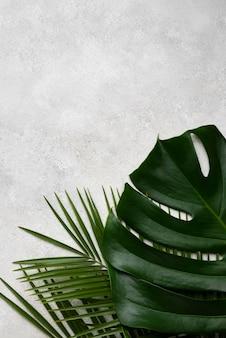 Draufsicht des monstera-blattes und anderer pflanzen mit kopienraum