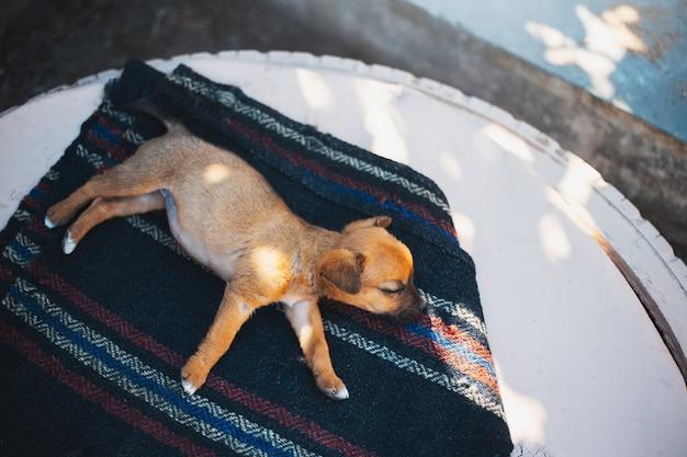 Draufsicht des roten babyhundes, der außerhalb des sommers schläft.