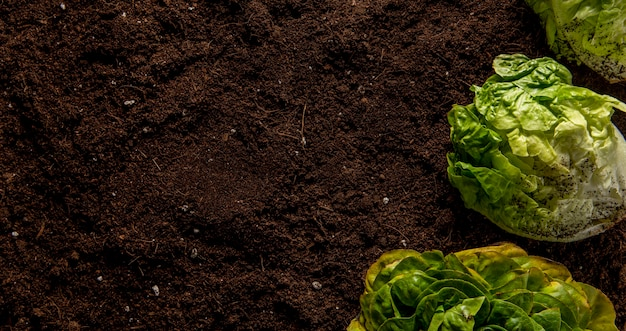 Draufsicht des salats mit kopierraum