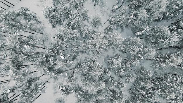Draufsicht des schneebedeckten waldes