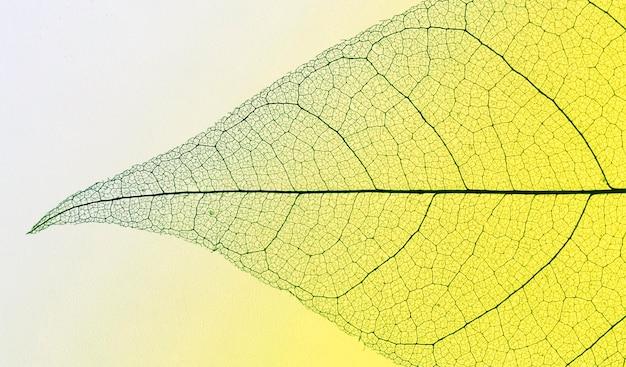 Draufsicht des transparenten blattes