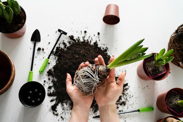 Draufsicht, die pflanzenzwiebel in boden pflanzt