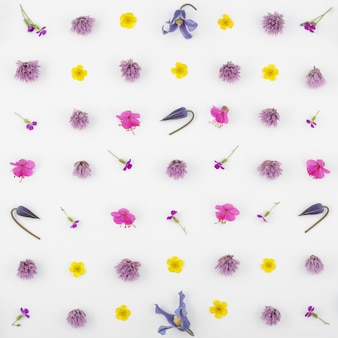 Draufsicht einer blumenkomposition auf einem weißen hintergrund. ein muster von blühenden knospen von gartenpflanzen und farnblatt.