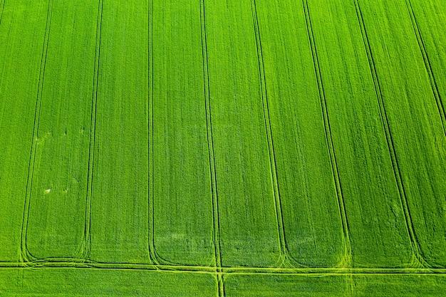 Draufsicht eines gesäten grünen und grauen feldes in weißrussland