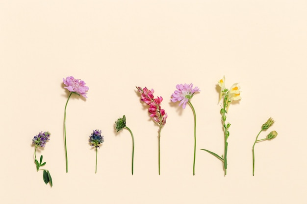Draufsicht frische wiesenblumen und gras auf blassrosa farbhintergrund sommerfeldpflanzen