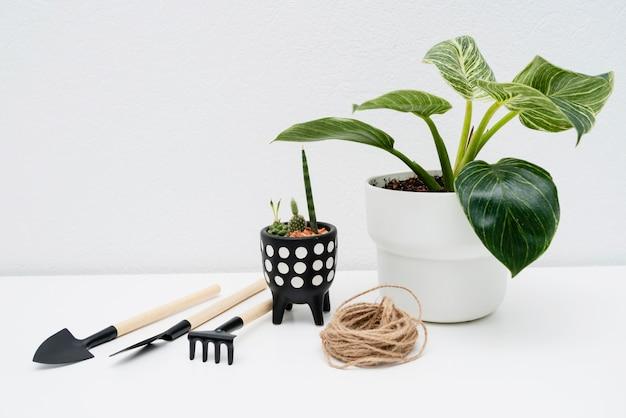 Draufsicht gartengeräte neben pflanze