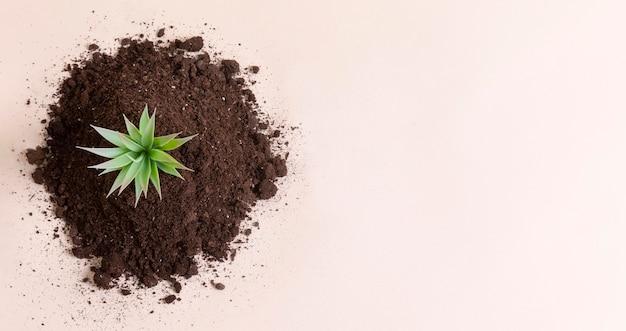 Draufsicht kleine pflanze mit kopierraum