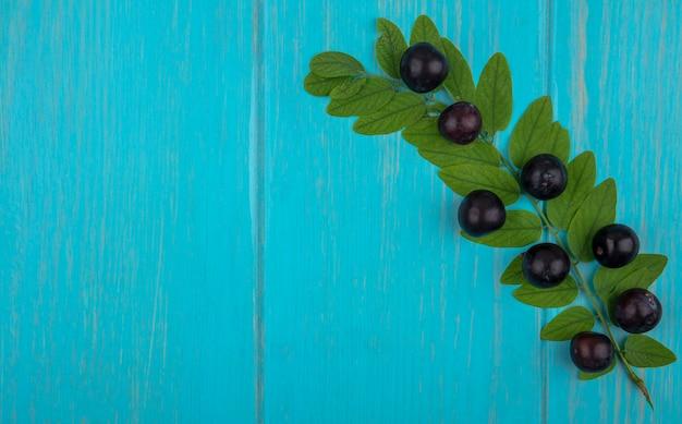 Draufsicht kopieren raum süße kirsche auf einem zweig mit blättern auf einem türkisfarbenen hintergrund
