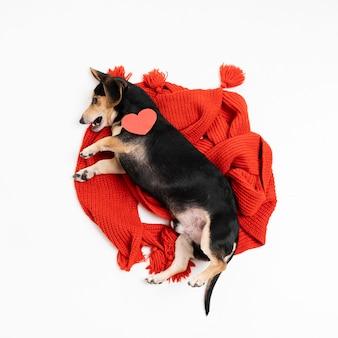 Draufsicht niedlichen kleinen hund entspannend