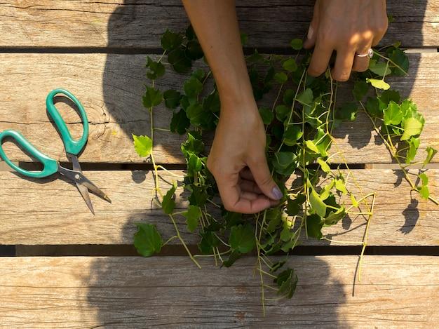 Draufsicht person, die sich um pflanzen kümmert