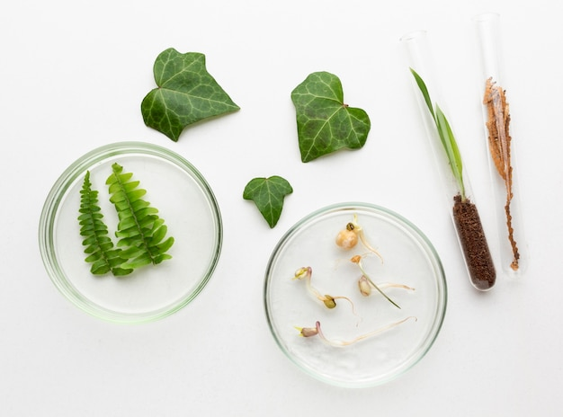 Draufsicht pflanzen und glaswarenanordnung