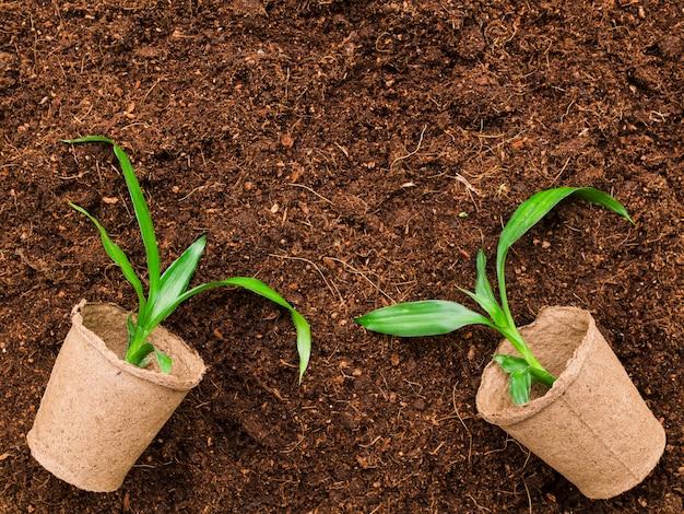 Draufsicht pflanzen