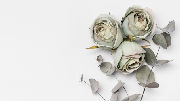 Draufsicht rosen mit kopierraum