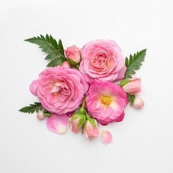 Draufsicht rosenblumen