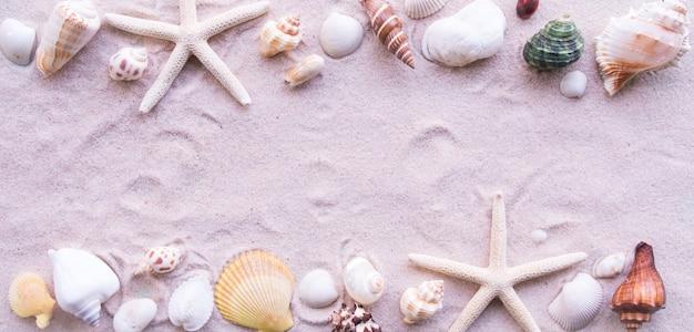 Draufsicht, strand und shell