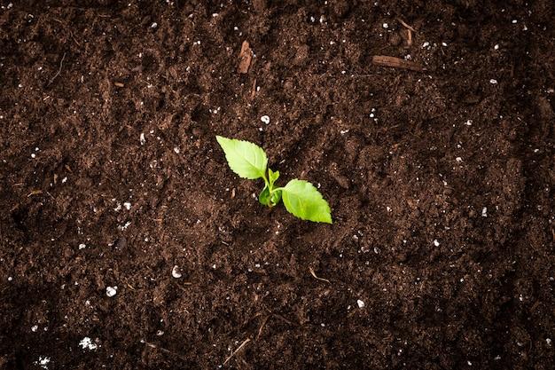 Draufsicht t der sämlingsgrünpflanzeoberfläche