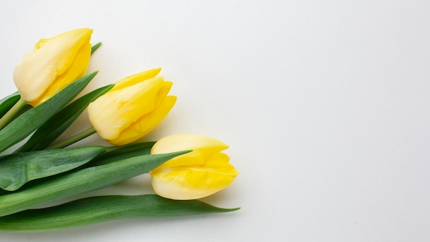 Draufsicht tulpenblumen