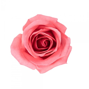 Draufsicht und isolatbild der schönen rosarosenblume.