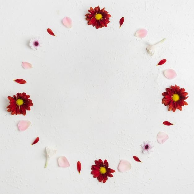 Draufsicht von frühlingsgänseblümchen mit zusammenstellung von blumenblättern