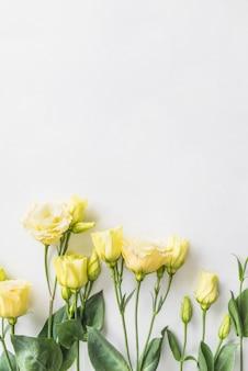 Draufsicht von gelben rosen