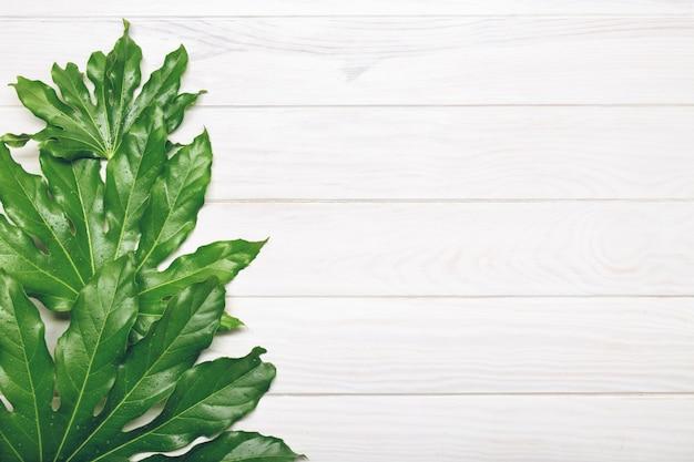 Draufsicht von grünblättern auf weißem holz