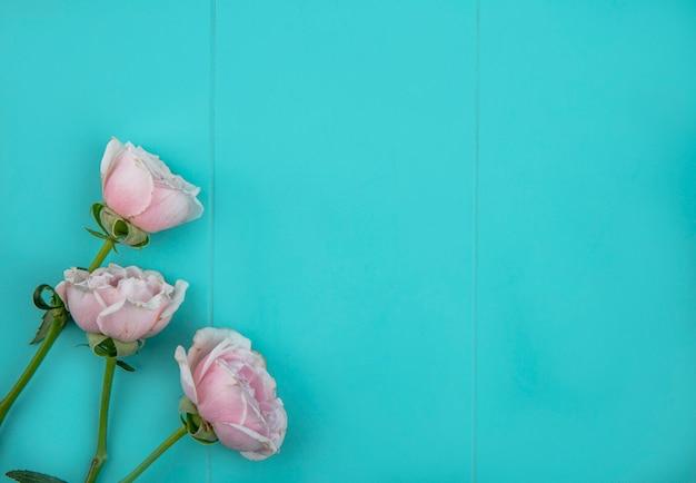 Draufsicht von hellrosa rosen auf einer hellblauen oberfläche