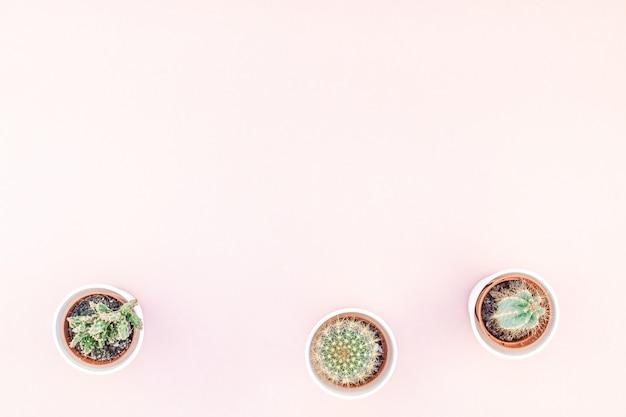 Draufsicht von kleinen töpfen mit dekorativen kakteen