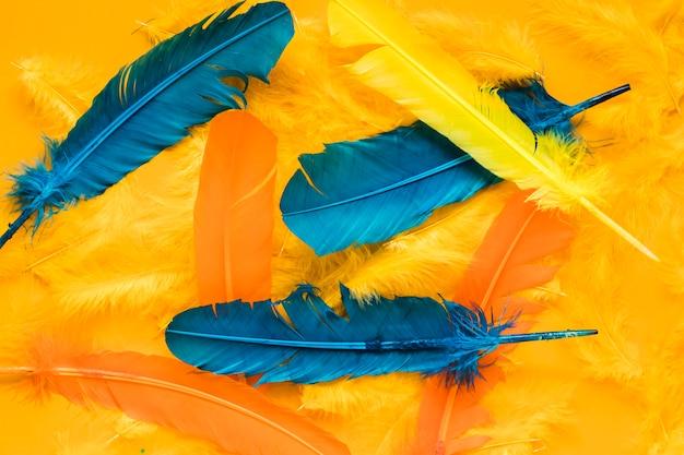 Draufsicht von mehrfarbigen federn für karneval