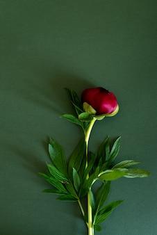 Draufsicht von pfingstrosenblumen