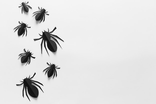 Draufsicht von spinnen auf weiß