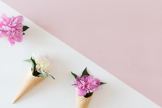 Draufsicht von waffelkegeln mit pfingstrosenblumen auf pastellrosa und weißem hintergrund, ebenenlage