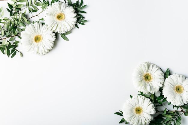 Draufsicht von weißen gänseblümchen