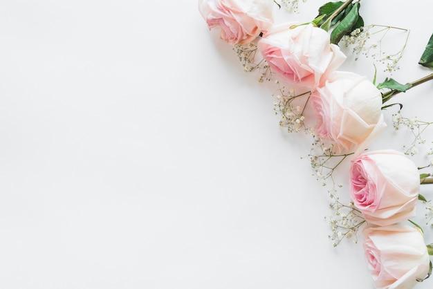 Draufsicht von weißen rosen