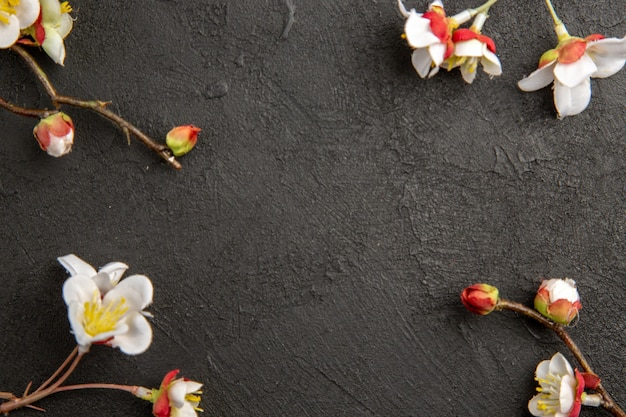 Draufsicht weiße blumen auf dunklem hintergrund pflanzenschönheit eleganz farbfoto