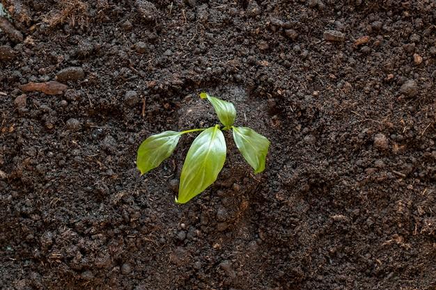Draufsicht winzige pflanze im boden