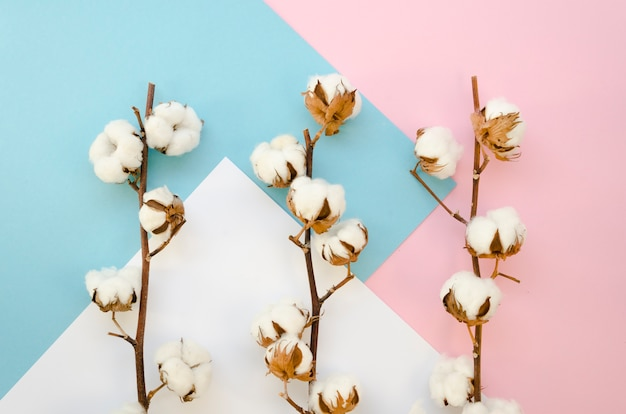 Draufsicht zweige mit baumwollblumen