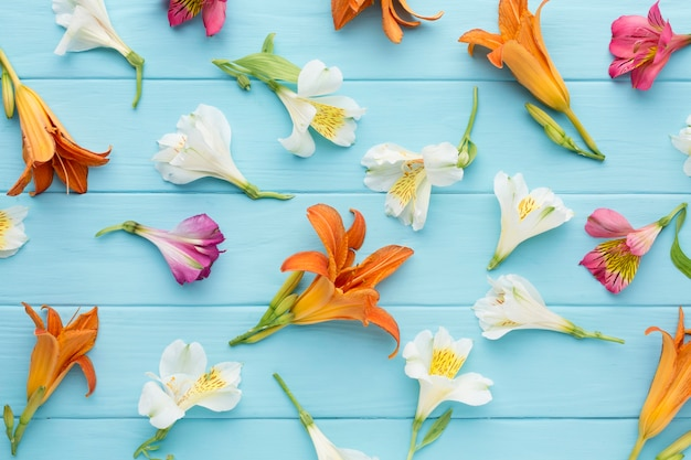 Draufsichtanordnung der bunten alstroemeria und der lilien