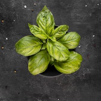 Draufsichtanordnung der nahrhaften pflanze in der schüssel