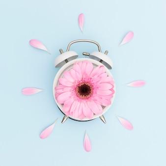 Draufsichtanordnung mit rosa gänseblümchen und uhr