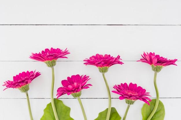 Draufsichtblumen auf hölzernem hintergrund