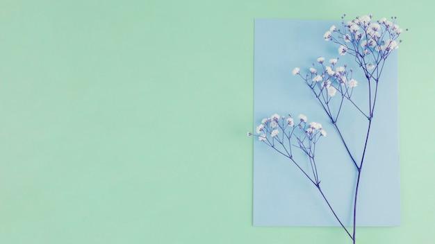 Draufsichtblumen mit kopienraum