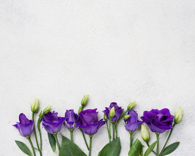 Draufsichtblumen mit kopieraum