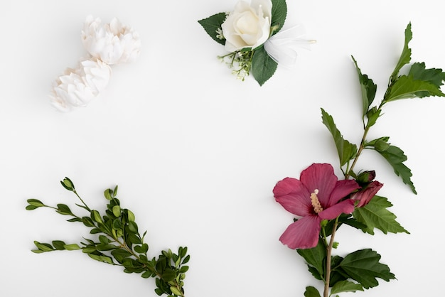 Draufsichtblumen mit weißem hintergrund