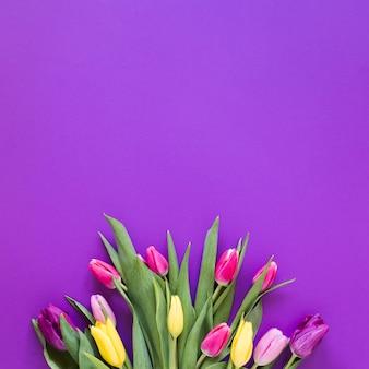 Draufsichtblumenstrauß der tulpe blüht auf violettem kopienraumhintergrund