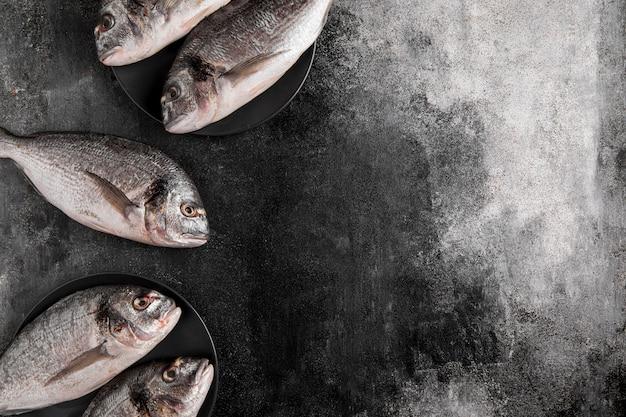 Draufsichtfisch auf kopierraumhintergrund