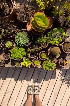 Draufsichtfrau, die neben ihren pflanzen steht